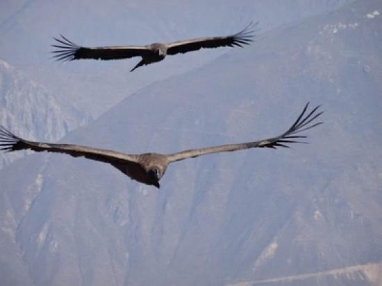 Circuit Pérou Croix du Condor Canyon de Colca